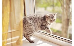 Что делать, если кот выпал из окна