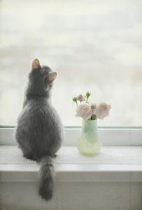 Что необходимо сделать, что бы кот не выпадал из окна