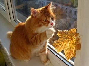 Кот выпал из окна, что делать