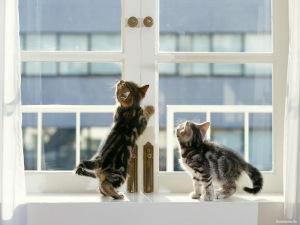 Кот выпал из окна - первая помощь, последствия и профилактика