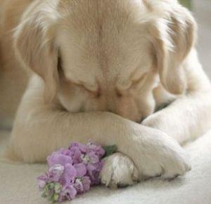 Как определить, когда собаку вырвет?