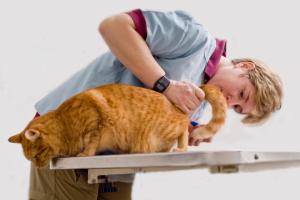 Диагностика причин, приводящих к появлению крови в моче у кота / кошки / котенка