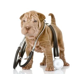 Рвота у собаки - первая помощь