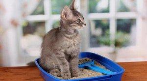 Кровь в моче у кота / кошки / котенка - причины появления