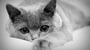 Как заметить появление крови в моче у кота / кошки / котенка?