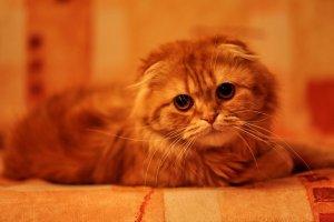 Причины появления крови в моче у кота / кошки / котенка