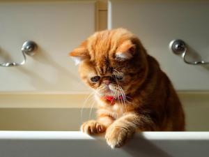 Первая помощь при появлении крови в моче у кота / кошки / котенка