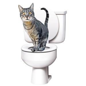 Все о запорах у кошек, котов и котят