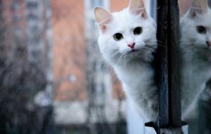 Первая помощь, если кот выпал из окна