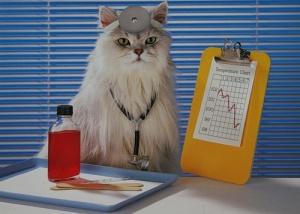Лечение заболеваний, приводящих к появлению крови в моче у кота / кошки / котенка