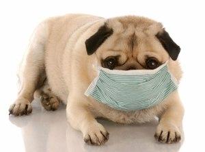 Собака кашляет белой пеной- причины и лечение