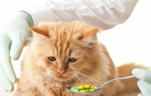 Препараты от кашля у кошек, котов и котят