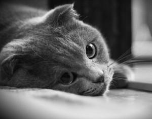 Причины возникновения гематом у кошек, котов и котят