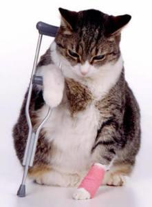 Травматические повреждения у кошек, котов и котят