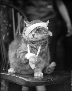 Первая помощь и лечение ушибов у кошек, котов и котят