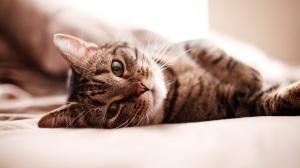 Кровавая рвота у кошек, котов и котят