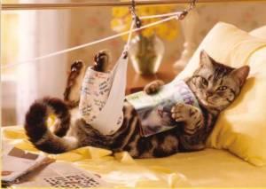 Ушибы у кошек, котов и котят