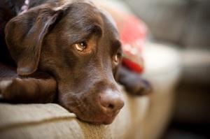 Почему у собаки отказали задние лапы?