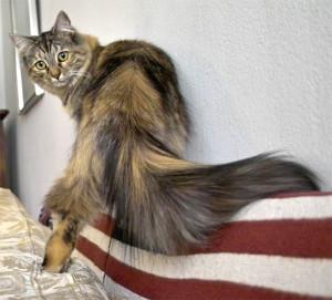 Кот кусает (грызет) хвост