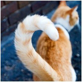 Причины, по которым кот кусает хвост
