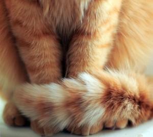 Кот часто лижет под хвостом