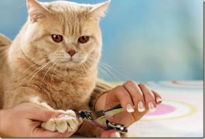 Как правильно ухаживать за когтями кошки?
