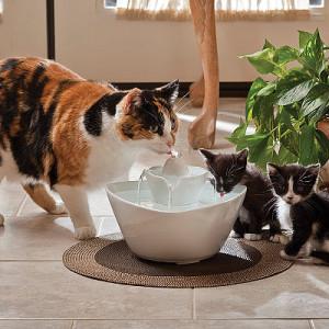 Случаи, когда кошка пьет много воды - это норма