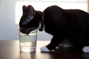 Как определить сколько воды пьет кот или кошка?