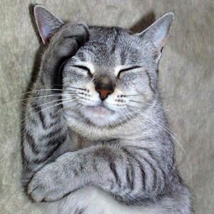 Виды инсульта и причины его возникновения у кошек