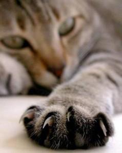 Пульс здоровой и больной кошки