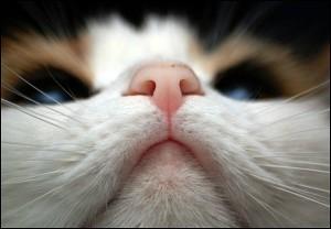 Нос здоровой и больной кошки
