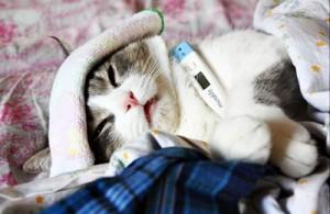 Как определить, что кошка заболела?