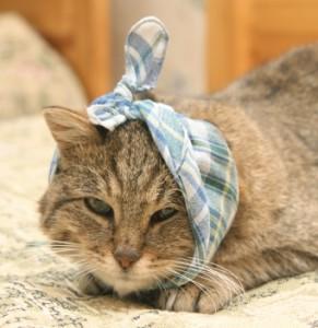 Наружный отиту кошек и котов