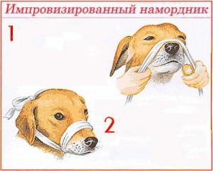 Намордник своими руками для собаки