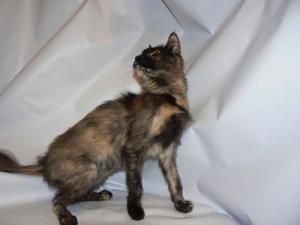 Гормональные нарушенияу кошек и котов