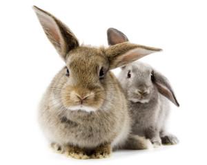 Кролик вялый - что делать?