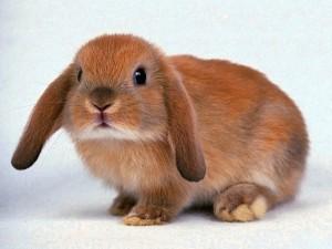 Почему кролик не хочет играть?