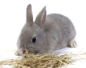 Почему кролик не пьет?