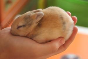 Кролику плохо - симптомы