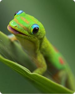 Причиныотсутствия аппетита у гекконов?