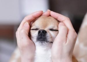 Диагностикарака кожиу собак