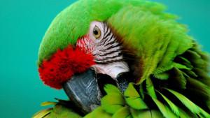 Кампилобактериозу попугаев