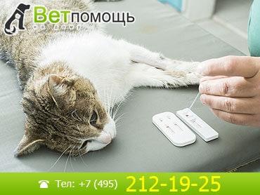 Анализы кошек на дому