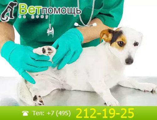 Хирургия собак