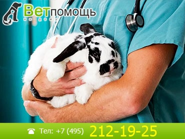 Кастрация и стерилизация кроликов на дому