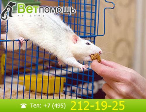 Лечение крыс