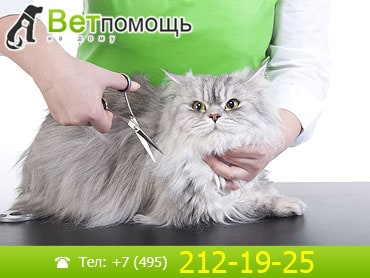 Стрижка, груминг и тримминг кошек на дому