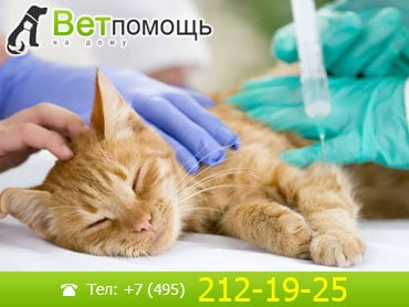 Усыпление кошек