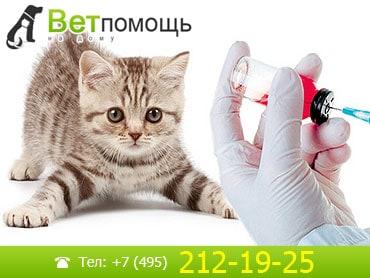 Вакцинация кошек и котов на дому