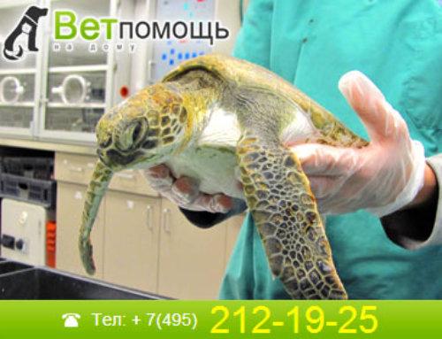 Лечение черепах